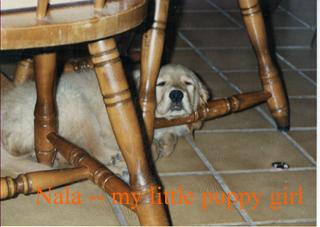 nala-as-puppy.jpg