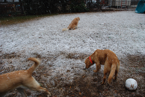 Montgomery, Alabama snow storm January 19,2008